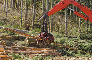 Clear Cutting | Carlson and Sons Logging Inc | Longview, WA | (360) 795-3068