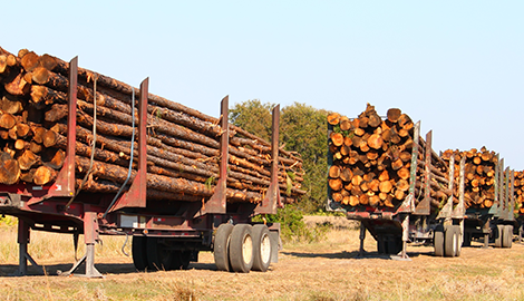Thinning | Carlson and Sons Logging Inc | Longview, WA | (360) 795-3068