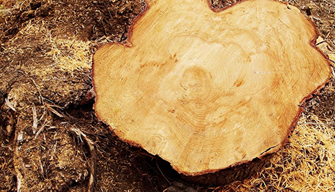 Logging | Carlson and Sons Logging Inc | Longview, WA | (360) 795-3068